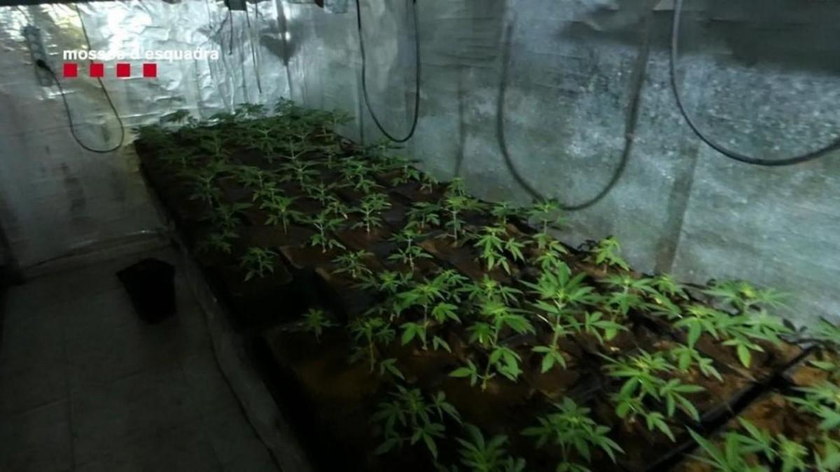 Un incendio destapa una plantación de marihuana en un sótano de Viladecans, noticias viladecans, viladecans noticias
