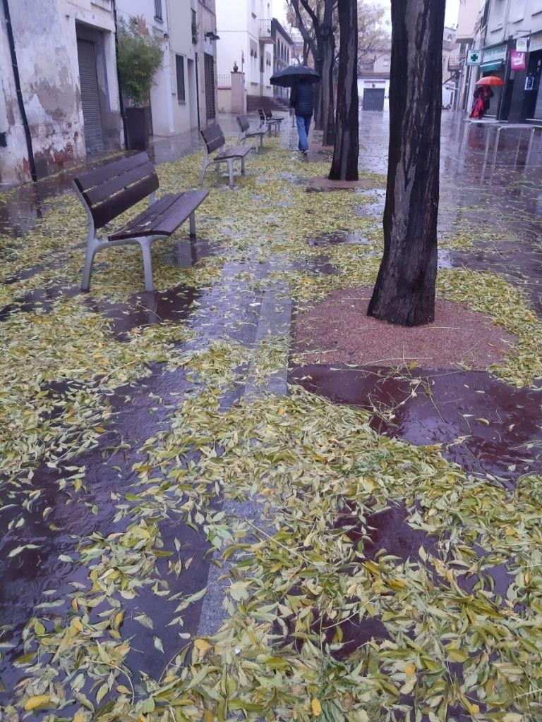 Fulles de tardor - Viladecans News