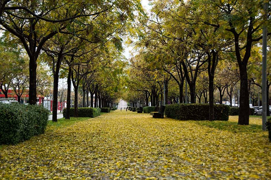 Paseo - Viladecans News